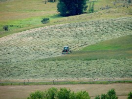 Haymaking_1_mowing
