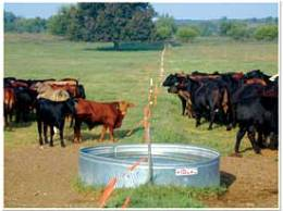 This picture from a Noble Foundation trial, shows the shared water source that Mark Cressman talks about in the video.
