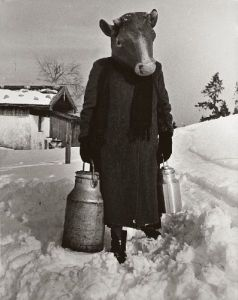 Bessie hauls the milk for you.  You can help her do her job better as winter approaches.