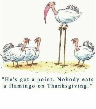 FlamingoThanksgiving