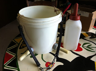Bucket and Bottle for Feeding Calves
