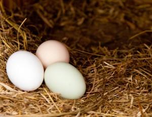 eggs-in-straw-300x230