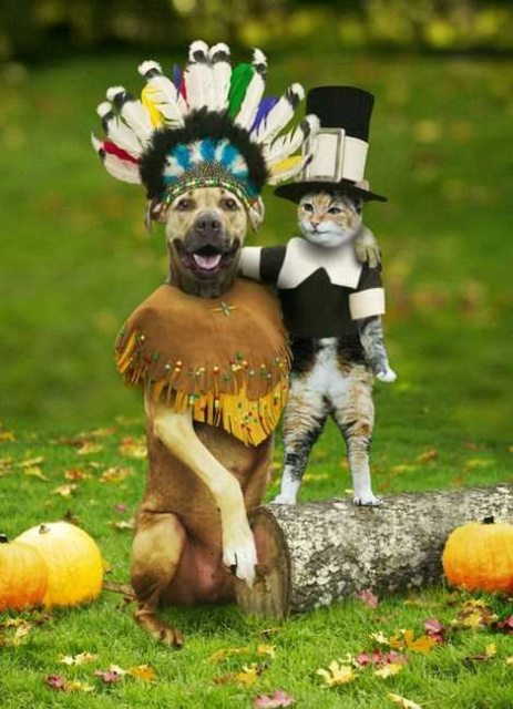 happy-thanksgiving-cat-dog