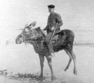 A Russian Cavalry Office on his War Moose circa 1935.
