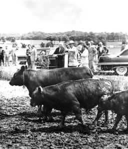 Even President Eisenhower was proud of his weaning weights.  This photo from the Eisenhower National Historic Site Museum Exhibit shows him at his farm checking out his stock with West German Chancellor Konrad Adenauer.  Photo courtesy of the NPS and the Eisenhower Presidential Library in Abilene, Kansas.