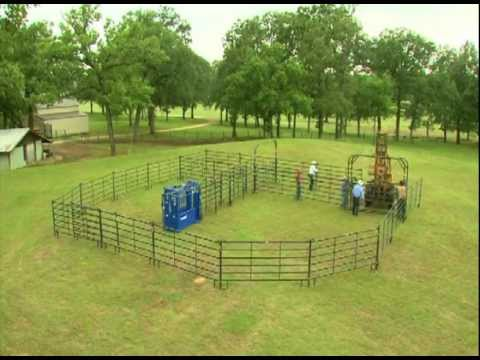 "Build a ""Bud Box"" to Make Livestock Handling a Breeze"