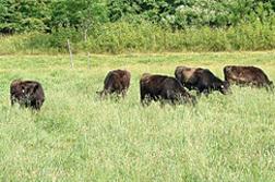 pastures110303