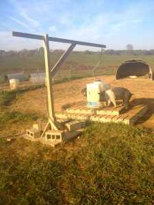 A closer look at our hog drinker and raised platform.  Click for a larger picture size.