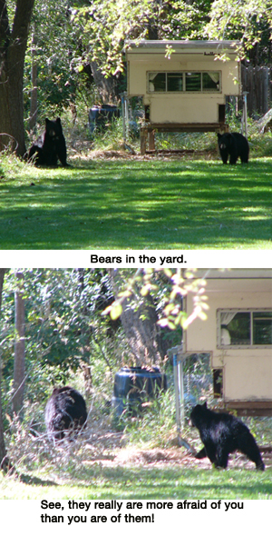 Bears in the yard