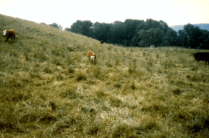 Our pastures in the early 1980s.