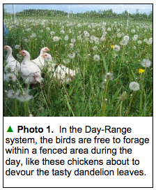"From ""Perfecting the Day-Range Poultry System"" bib Jason Fischbach, UW-Extension Agent"