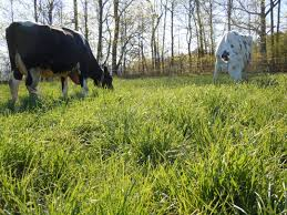 Here's a well-managed, diverse pasture courtesy of UVM.