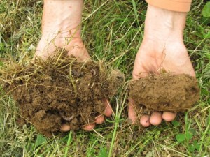 This photo from notillveggies.org shows the difference between untilled soil (on the left) and tilled soil.  Which one would your pasture plants prefer?