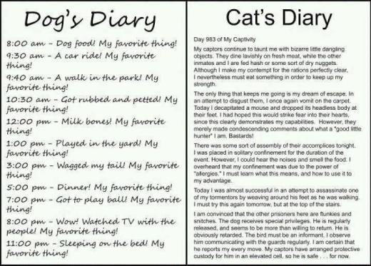 Dog and Cat Diaries