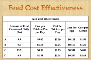 Chicken Feed Cost Effectiveness