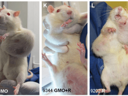 Rats with mammary tumors from Séralini study