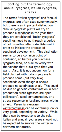 Ryegrass definitions