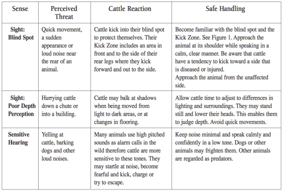 Cattle Senses and Reactions. Click for full size.