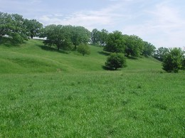 A pasture of Hidden Valley meadow fescue on a farm near Mineral Point, Wisconsin. Photo courtesy of Michael Casler