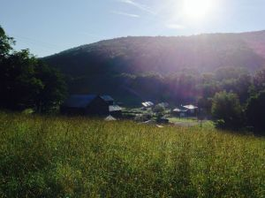 Goodmorning Sap Bush Hollow Farm!