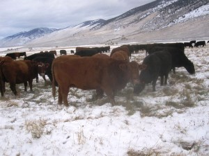 CP snow grazing Oct 26