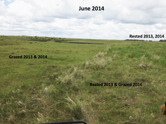Here you can see different regrowth based on the management of rest and grazing.