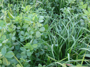 Growing the high forage diet