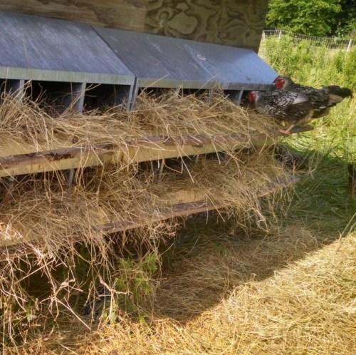 clean-nest-boxes