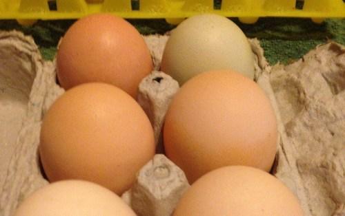 eggs-e1439215617485