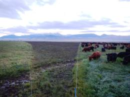 Rain and Mob Grazing 1