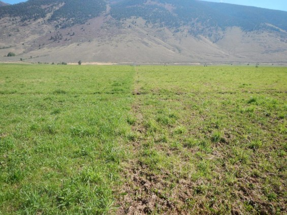Recovering Pasture 2 weeks later