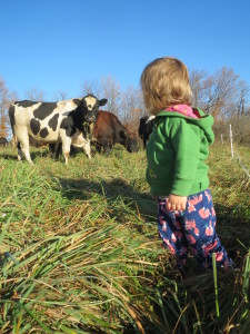 Grandaughter Hadley Owens lingers in the stockpiled grass after a paddock shift