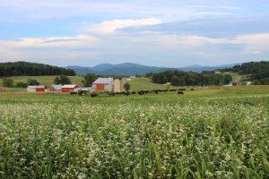 North Carolina Farm with beef