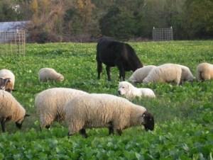 protecting_flock_NCAT