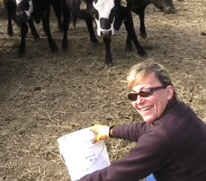 I have a blast teaching cows to eat weeds!