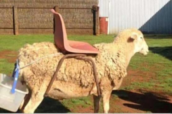 Riding Mower With Grass Catcher Sheep