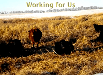 Working for us Sand Ranch