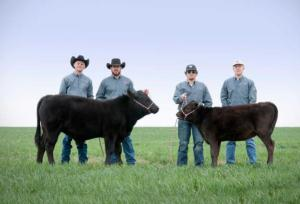 Part of the team caring for West Texas A&M University's clones, bull Alpha and one of the females called Gammas, from left to right: Kelly Jones, Landon Canterbury, Paydon Hales and Hayden Alexander.