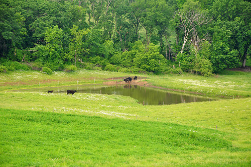 Nrcs Helps New Iowa Farmer Develop His Grazing System On