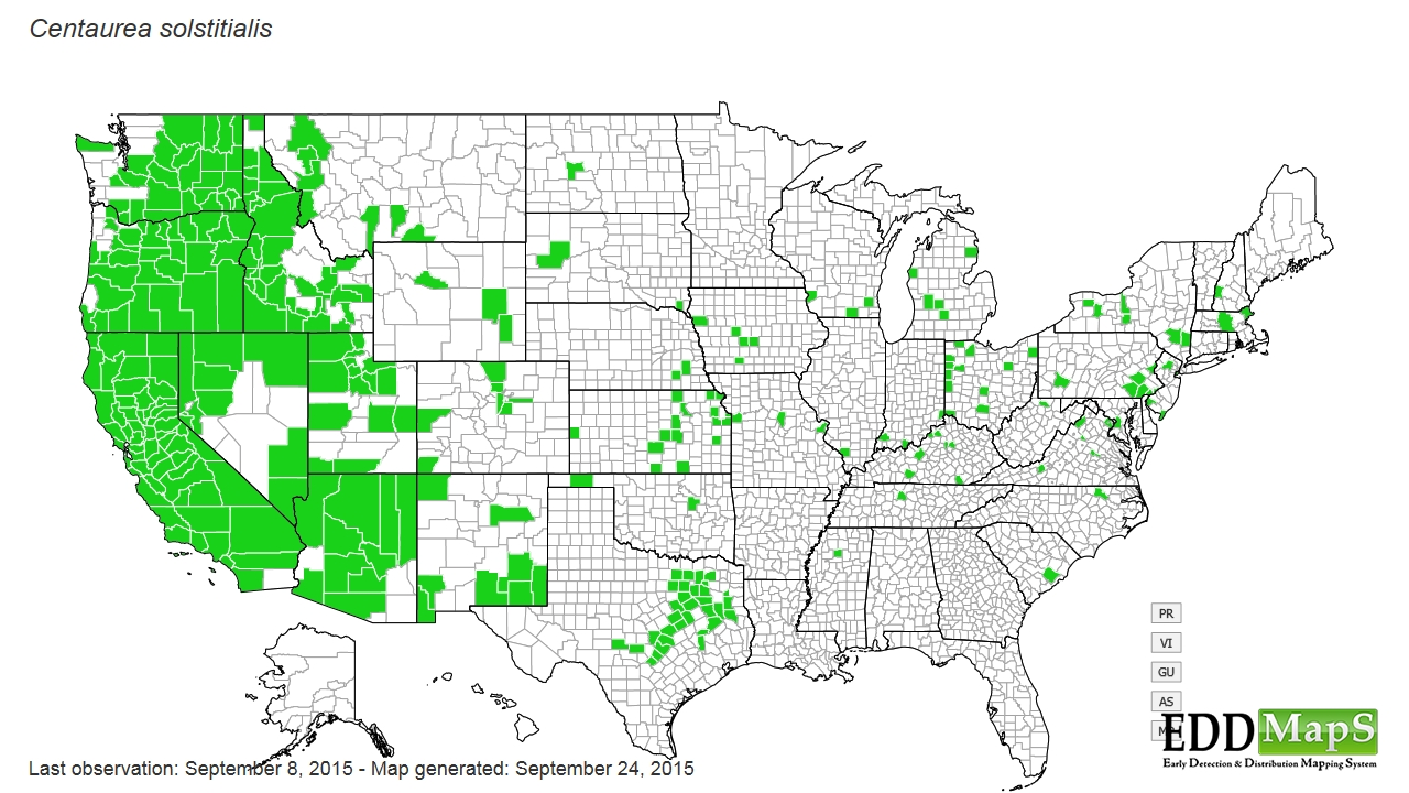 A 2002 Map Showed It On 14 Million Acres In California Making It The State S Most Wide Spread Weed But It Hasn T Stopped There It Has Continued To Spread