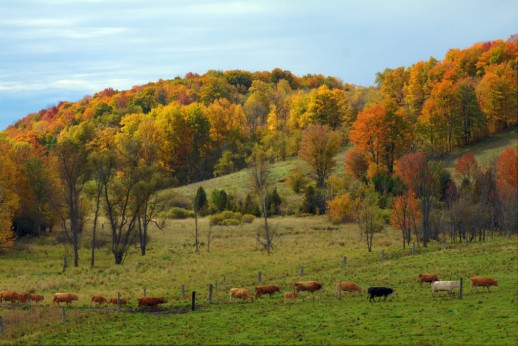 Protect Your Pastures And Hay Fields While Fall Grazing