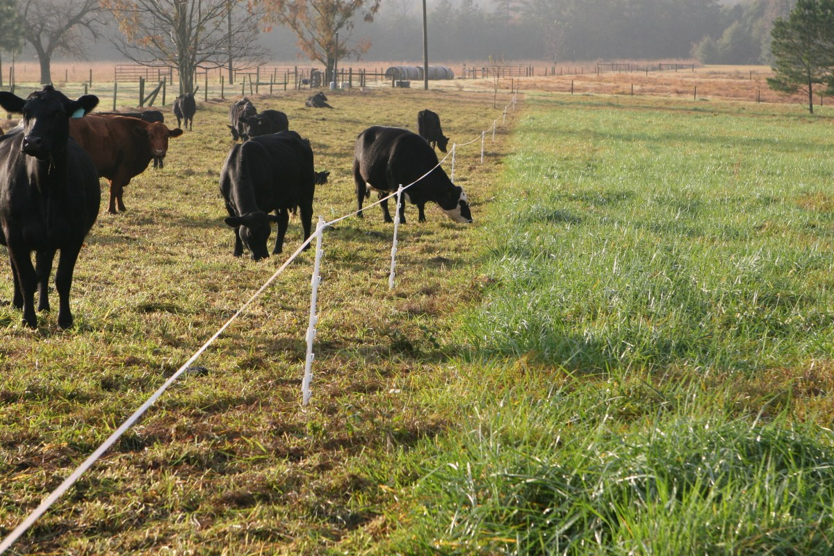 Digging Into The Business Of Custom Grazing On Pasture