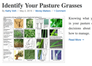 Not sure what pasture grasses you've got? Here's an On Pasture article to help you out.