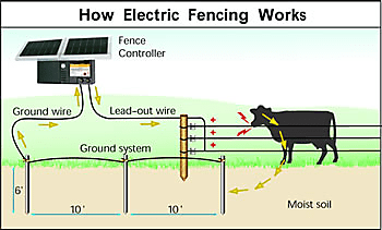 Winter Electric Fence Solutions On Pasture. An All Hot System Is One Where The Wires In Fence Are Electrified And Relies On Good Conductivity Through Soil To Carry Charge From. Wiring. Wire Diagram For Electric Fence For Cattle At Scoala.co