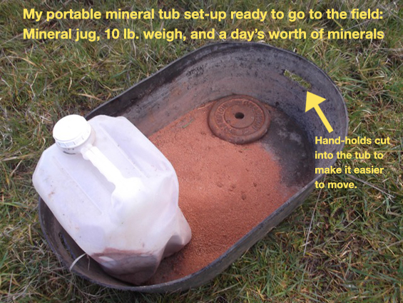 Solving Roadblocks to Supplementing Minerals on the Ranch