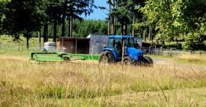 Hailey making hay.