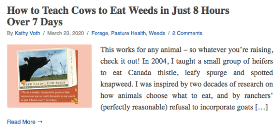 How to Teach Cows to Eat Weeds in Just 8 Hours Over 7 Days