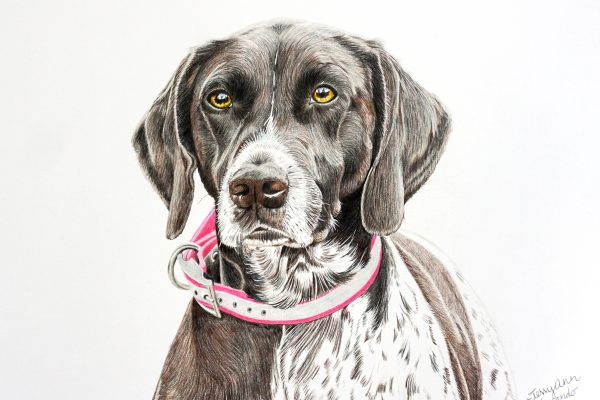 Sassy the German Shorthaired Pointer