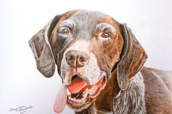 Wrigley the German Shorthaired Pointer