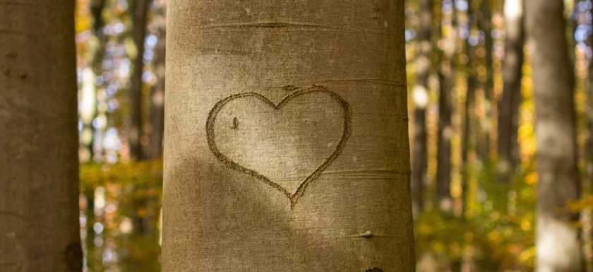 A heart scratched into a tree trunk. Photo.
